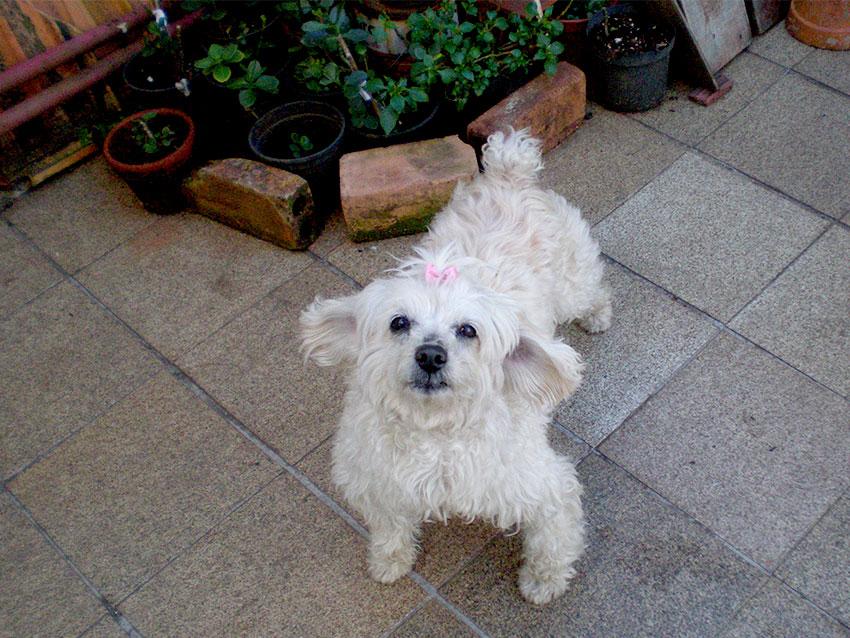 Essa é a Dolly! :)