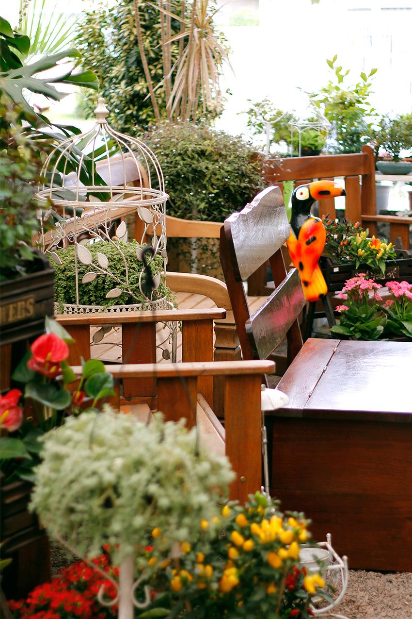 comprar-suculentas-floricultura-3