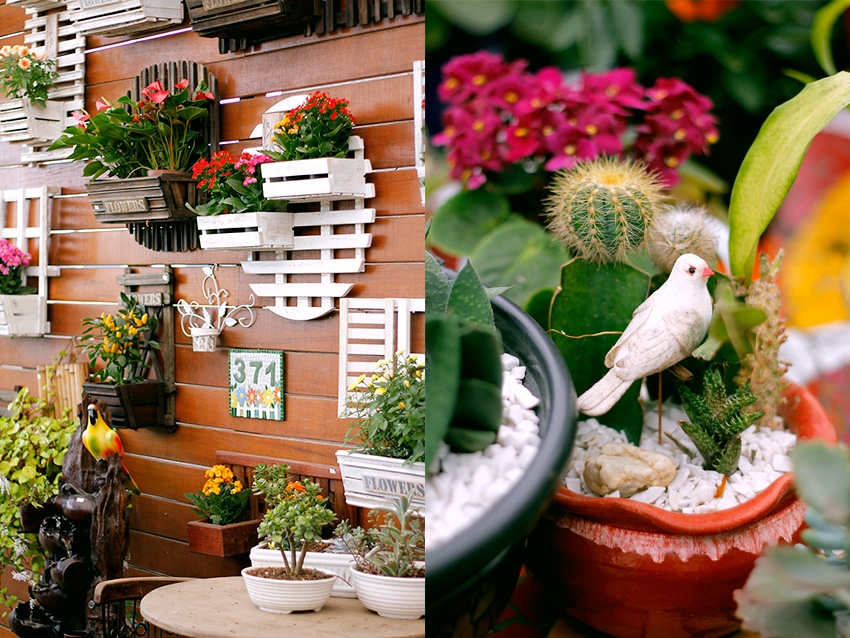comprar-suculentas-floricultura-7