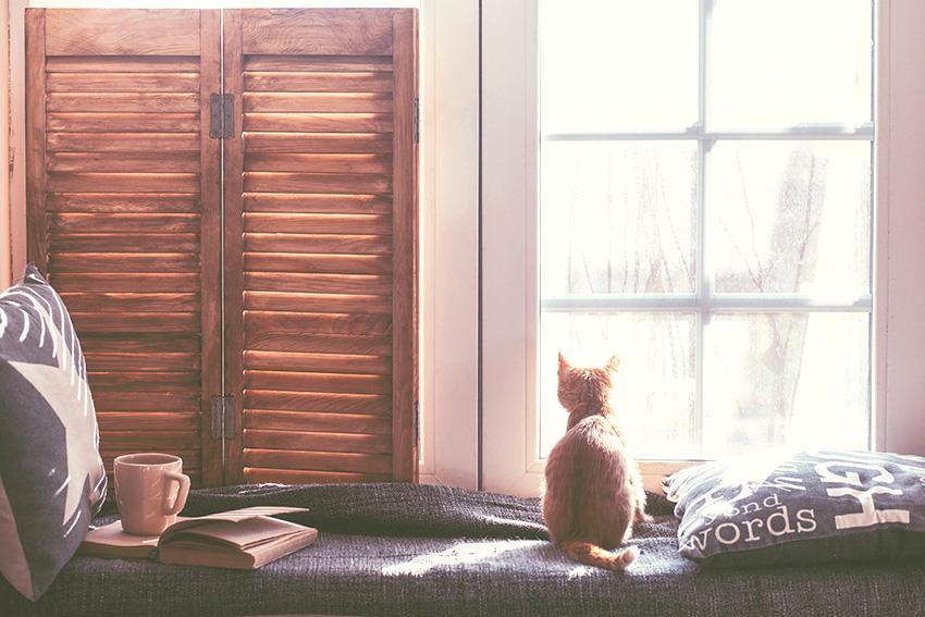 gato via shutterstock
