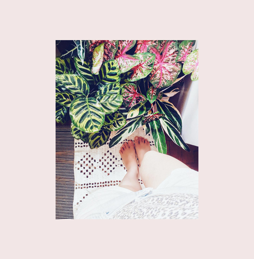 plantas-indoor-1