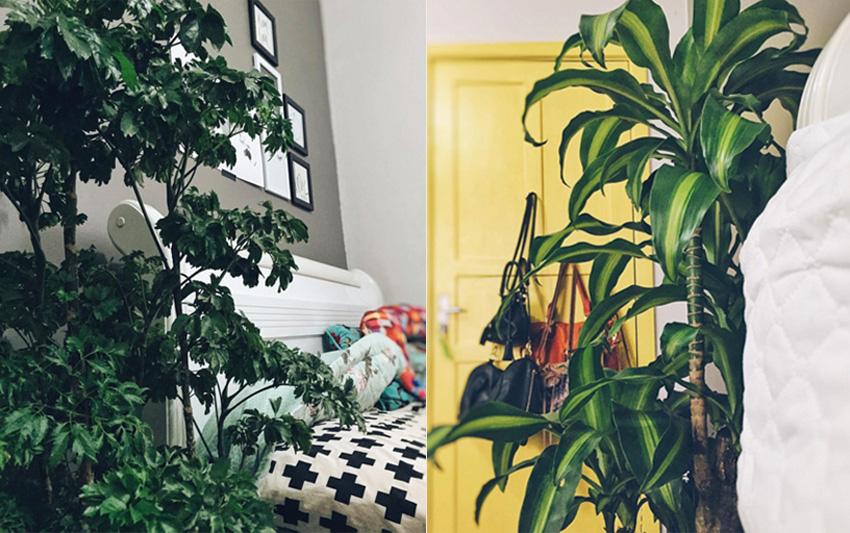 plantas-indoor-2