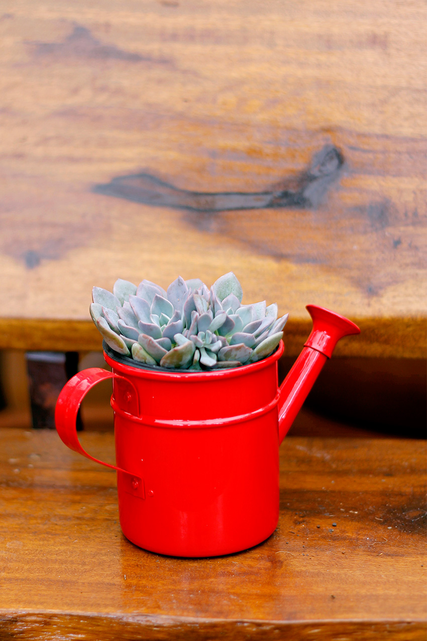 comprar-suculentas-floricultura-0