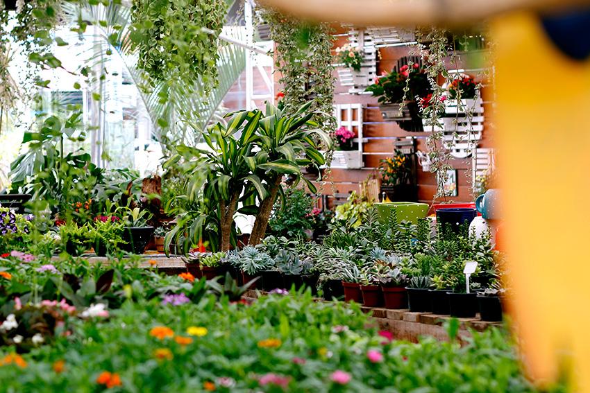 comprar-suculentas-floricultura-2