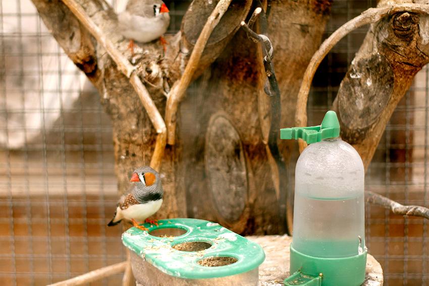 Apesar de eu não ser muito adepta em criar pássaros em gaiolas, achei uma gracinha esse tal de Mandarim!