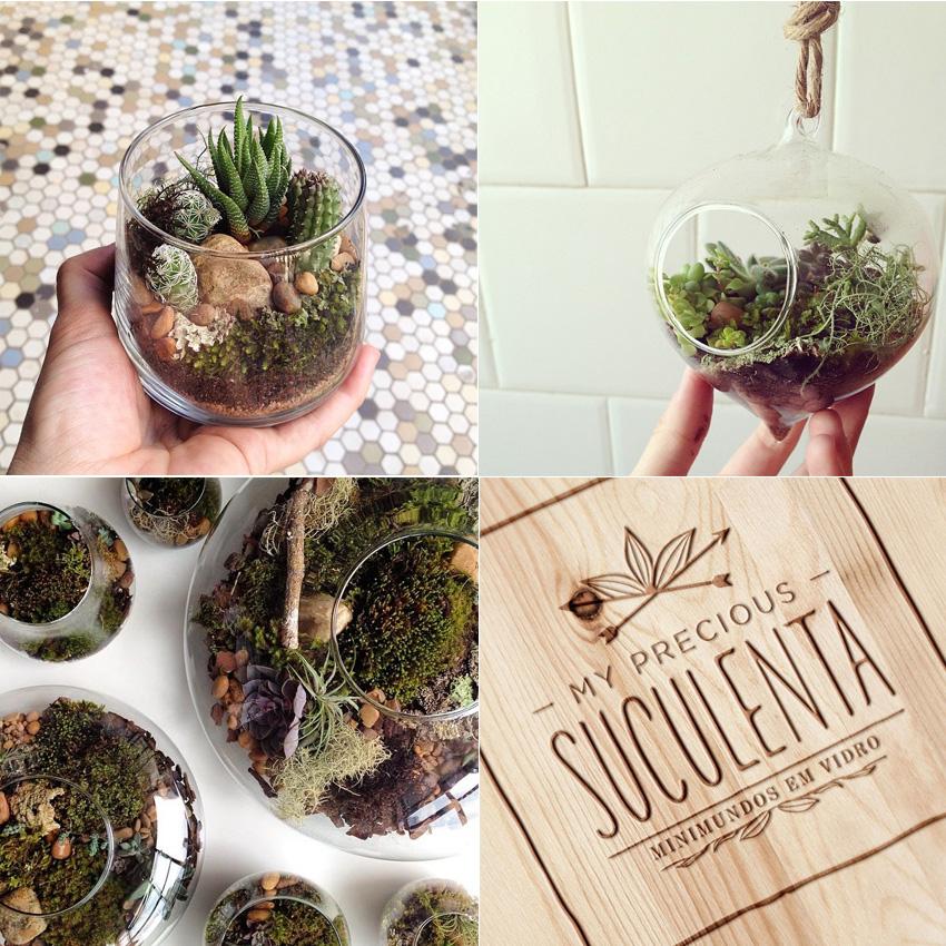 comprar-suculentas-my-precious