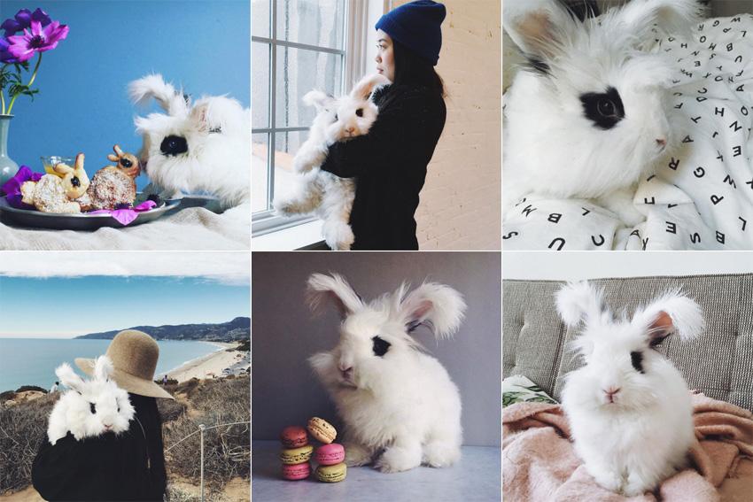 instagram-cleo_thebunny