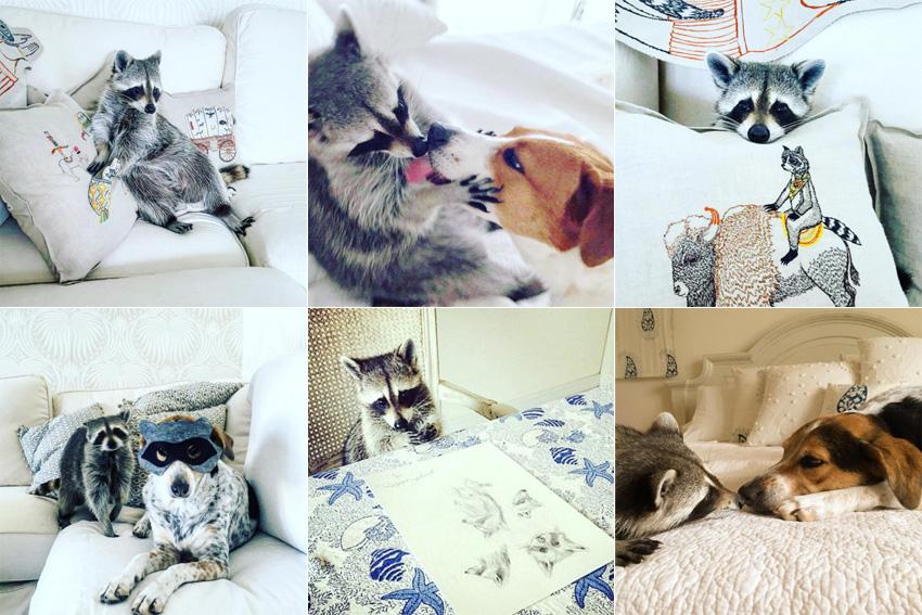 instagram-pumpkintheraccoon